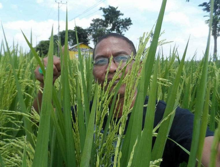 Rahasia Sukses Petani Menggunakan Jamu Bumi JST